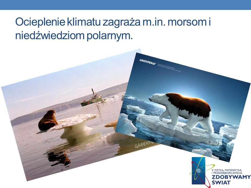 Ocieplenie klimatu zagraża m.in. morsom i niedźwiedziom polarnym.