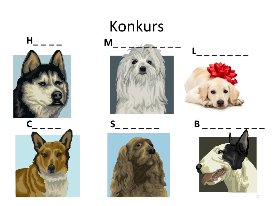 Zabawa i nauka psa 14