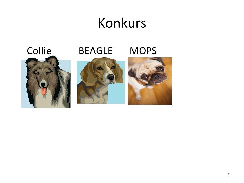 Konkurs Collie BEAGLE MOPS 7