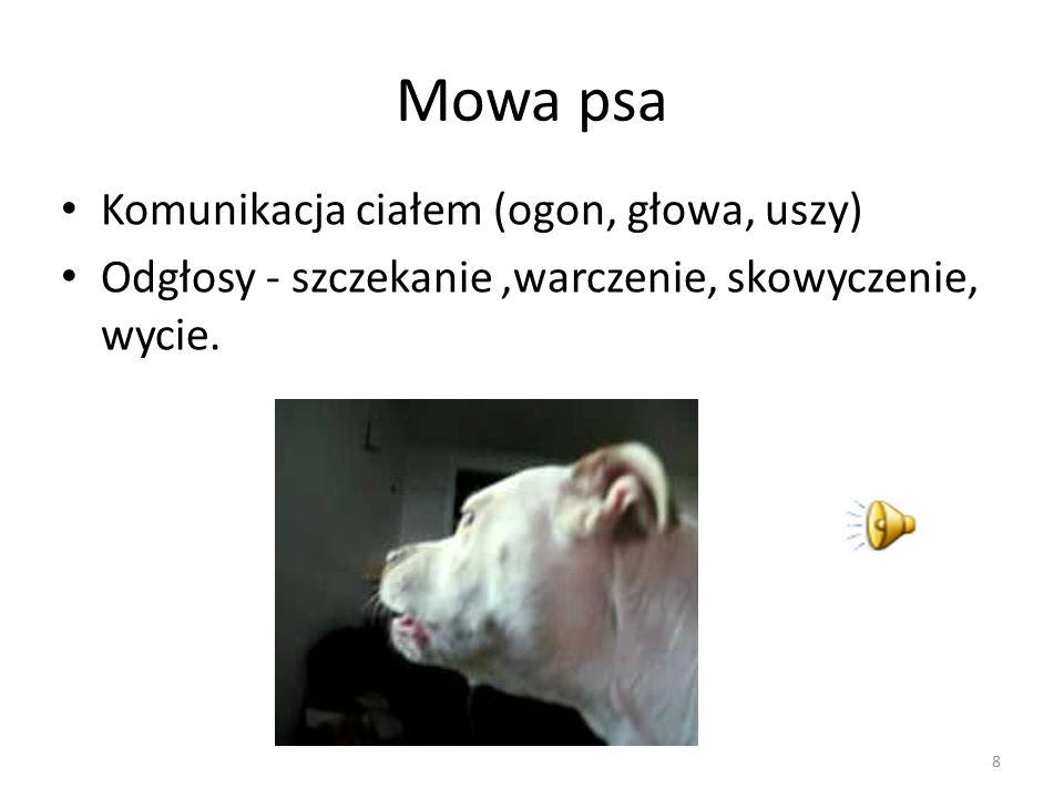 Mowa psa Komunikacja ciałem (ogon, głowa, uszy) Odgłosy - szczekanie,warczenie, skowyczenie, wycie.