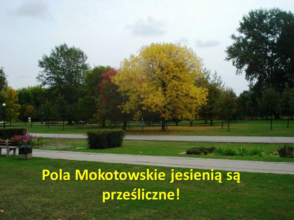 Pola Mokotowskie jesienią są prześliczne!