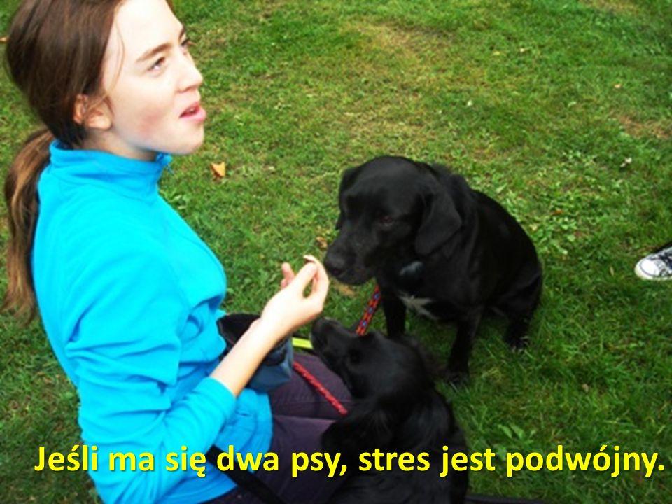 Jeśli ma się dwa psy, stres jest podwójny.