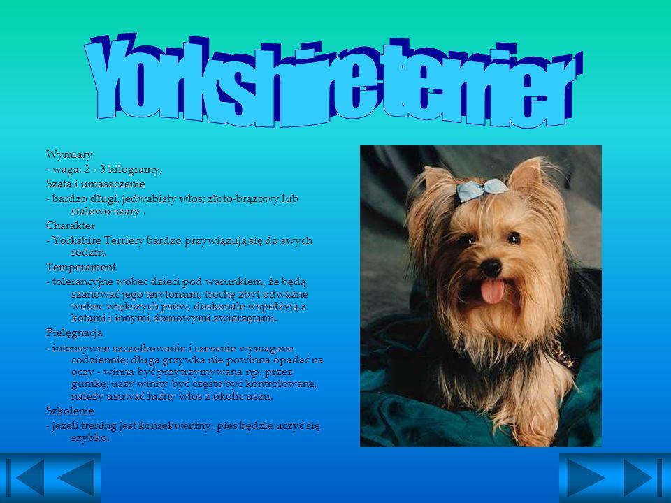 WestieYorkshire Terrier Chihuahua Golden Retriver Dog niemieckiRotweiler