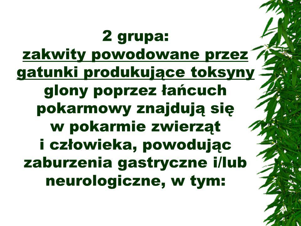 2 grupa: zakwity powodowane przez gatunki produkujące toksyny glony poprzez łańcuch pokarmowy znajdują się w pokarmie zwierząt i człowieka, powodując