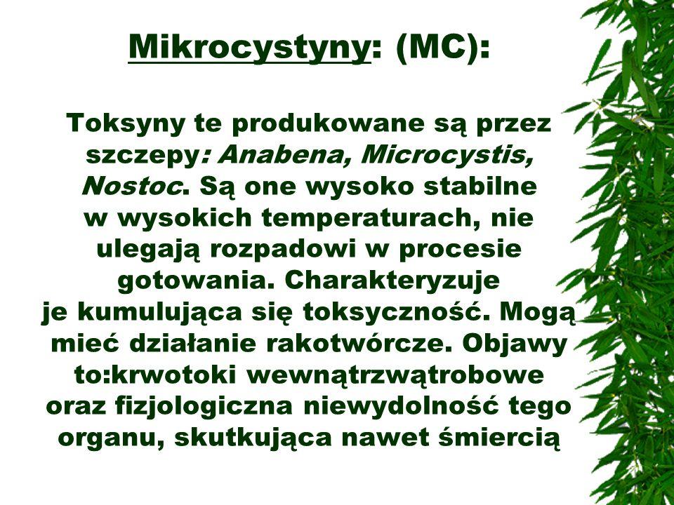 Mikrocystyny: (MC): Toksyny te produkowane są przez szczepy: Anabena, Microcystis, Nostoc. Są one wysoko stabilne w wysokich temperaturach, nie ulegaj