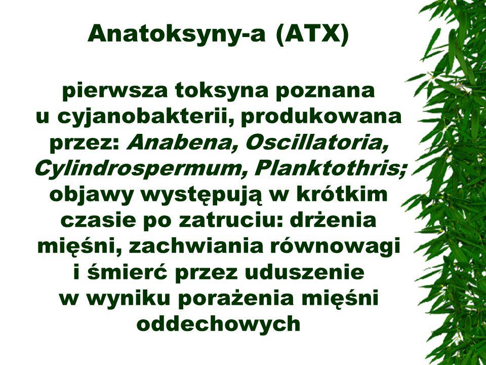 Anatoksyny-a (ATX) pierwsza toksyna poznana u cyjanobakterii, produkowana przez: Anabena, Oscillatoria, Cylindrospermum, Planktothris; objawy występuj