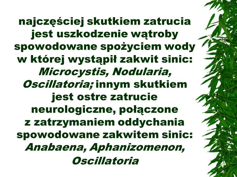 najczęściej skutkiem zatrucia jest uszkodzenie wątroby spowodowane spożyciem wody w której wystąpił zakwit sinic: Microcystis, Nodularia, Oscillatoria