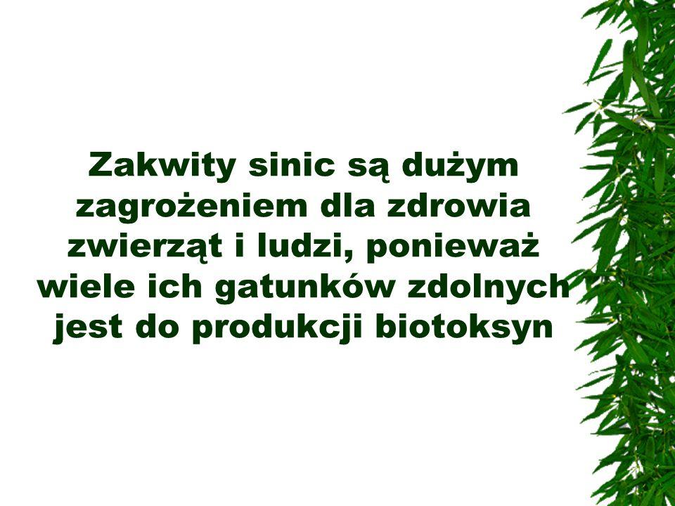 Zakwity sinic są dużym zagrożeniem dla zdrowia zwierząt i ludzi, ponieważ wiele ich gatunków zdolnych jest do produkcji biotoksyn