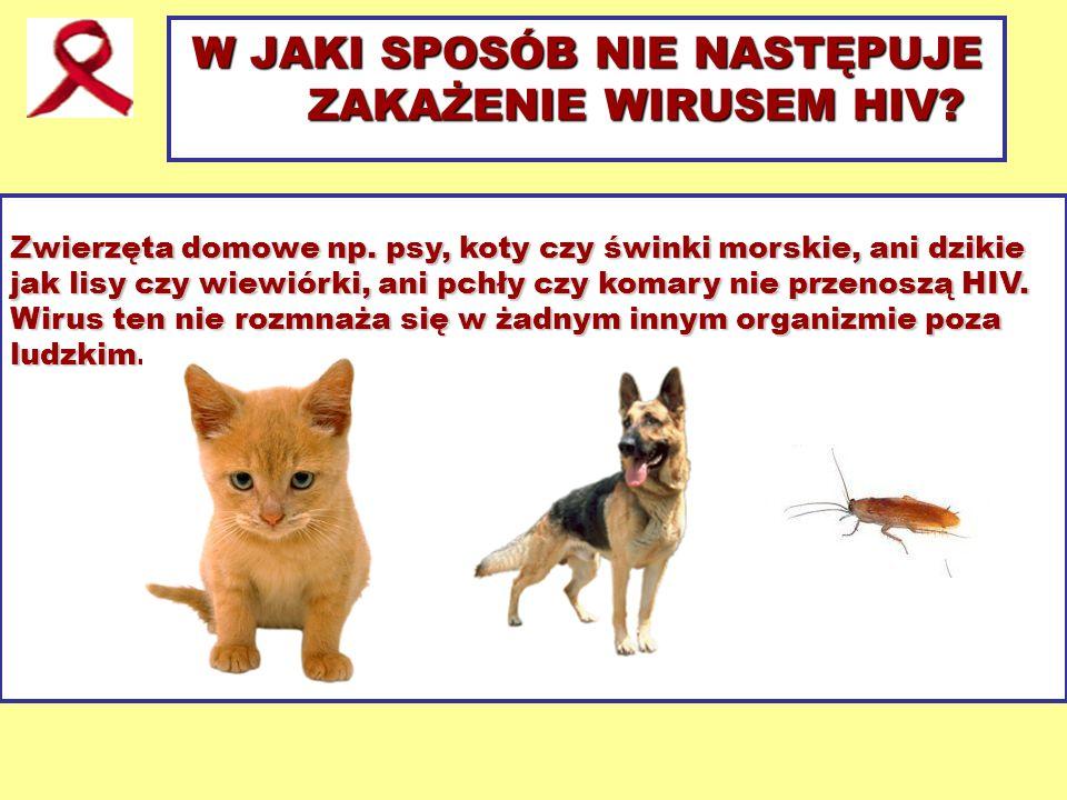 W JAKI SPOSÓB NIE NASTĘPUJE ZAKAŻENIE WIRUSEM HIV? Zwierzęta domowe np. psy, koty czy świnki morskie, ani dzikie jak lisy czy wiewiórki, ani pchły czy