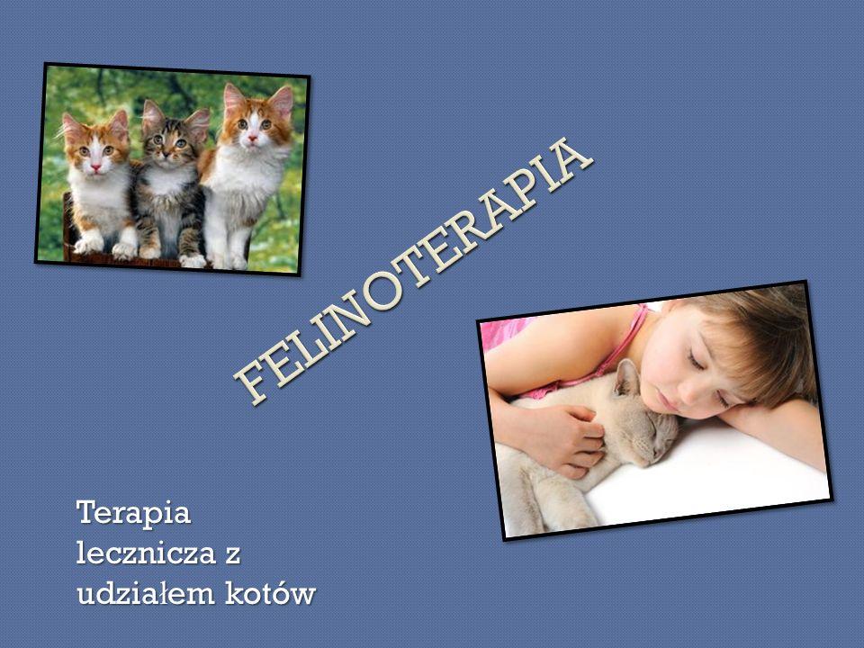 Terapia lecznicza z udzia ł em kotów