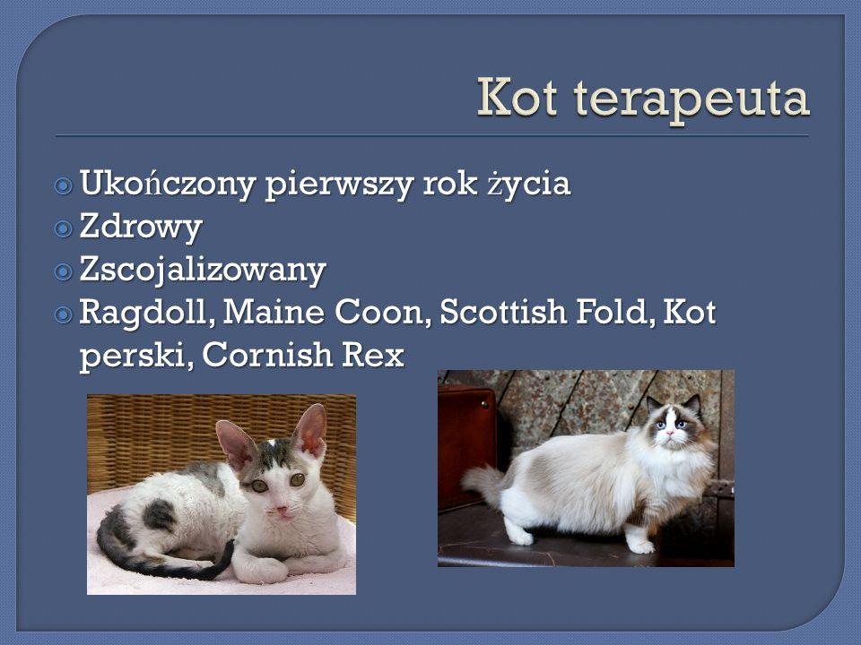 Uko ń czony pierwszy rok ż ycia Uko ń czony pierwszy rok ż ycia Zdrowy Zdrowy Zscojalizowany Zscojalizowany Ragdoll, Maine Coon, Scottish Fold, Kot pe