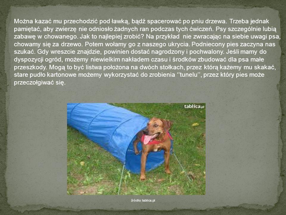 Wiadomo – każdy zwierzak ma swoje ulubione, ale istnieją zabawy uniwersalne, które wprawiają każdego psa w dobry nastrój. Bardzo dobrym sposobem na bu