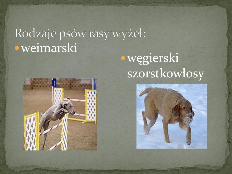 Pies myśliwski –jedyny w swoim rodzaju pies, który zamiera w bezruchu podnosząc jedną z łap, w ogromnym napięciu i skupieniu ustawia się w kierunku wy