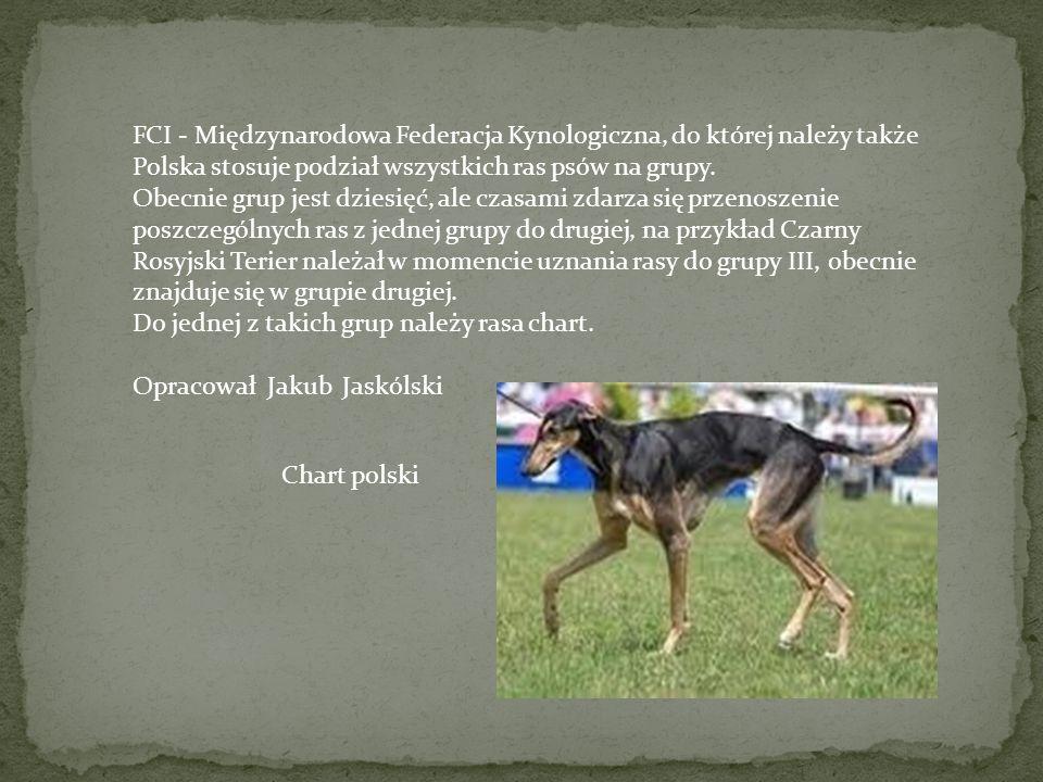 Pies, jako najstarsze zwierzę domowe, stał się z czasem najbliższym współpracownikiem i członkiem rodziny człowieka, współżyjąc z nim jak z przewodnik