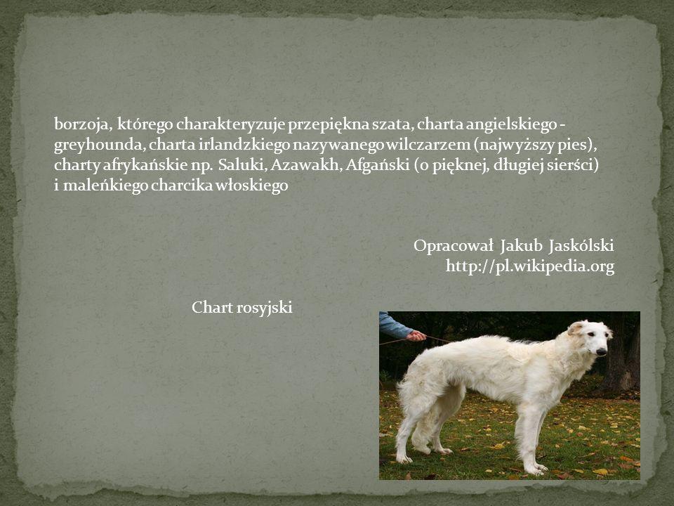 FCI - Międzynarodowa Federacja Kynologiczna, do której należy także Polska stosuje podział wszystkich ras psów na grupy. Obecnie grup jest dziesięć, a