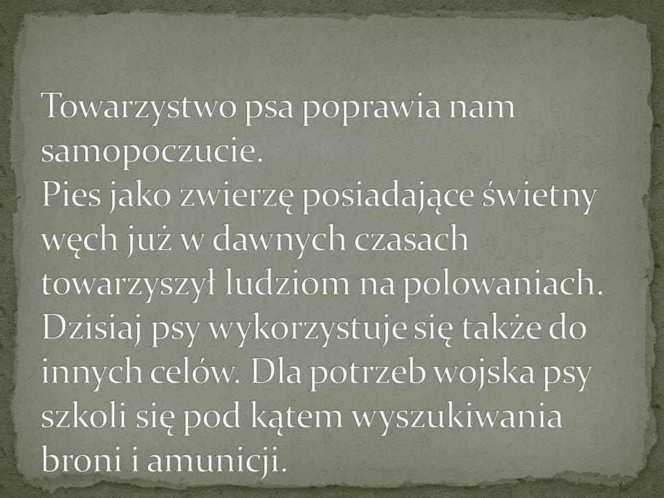 OWCZAREK PODHALAŃSKI Rasa polska ps ó w pasterskich, licznie hodowanych na Podhalu; duże (wys.60-70cm), masywne, o białej gęstej sierści.