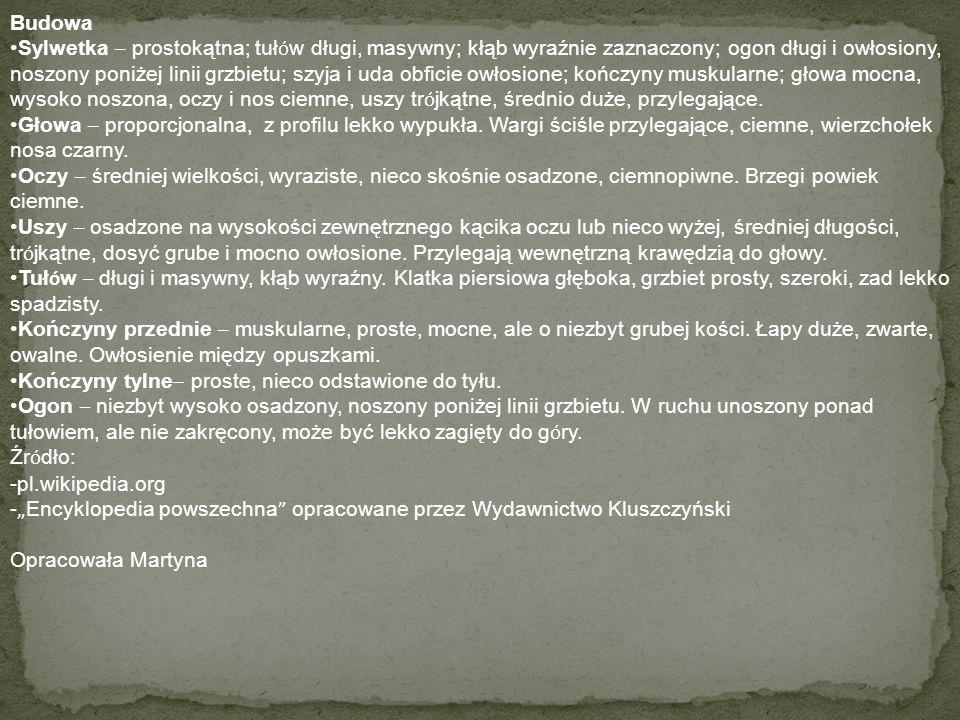 OWCZAREK PODHALAŃSKI Rasa polska ps ó w pasterskich, licznie hodowanych na Podhalu; duże (wys.60-70cm), masywne, o białej gęstej sierści. Temperament