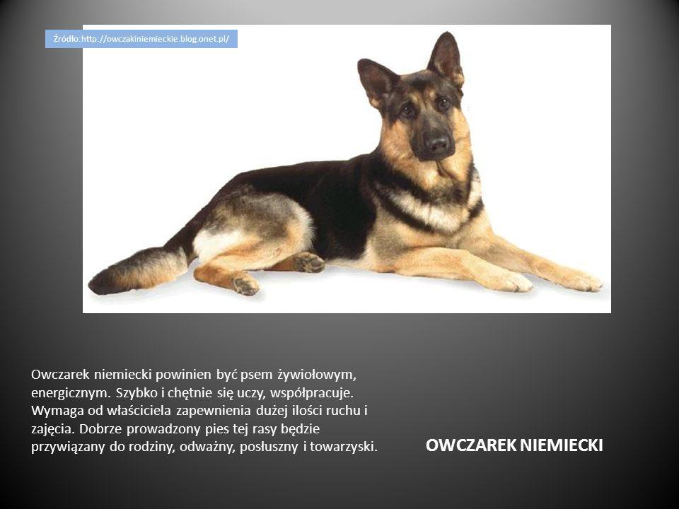OWCZAREK NIEMIECKI Owczarek niemiecki powinien być psem żywiołowym, energicznym. Szybko i chętnie się uczy, współpracuje. Wymaga od właściciela zapewn