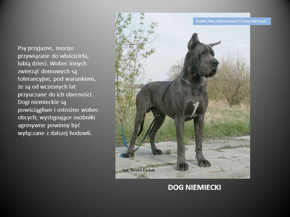 OWCZAREK NIEMIECKI Owczarek niemiecki powinien być psem żywiołowym, energicznym.