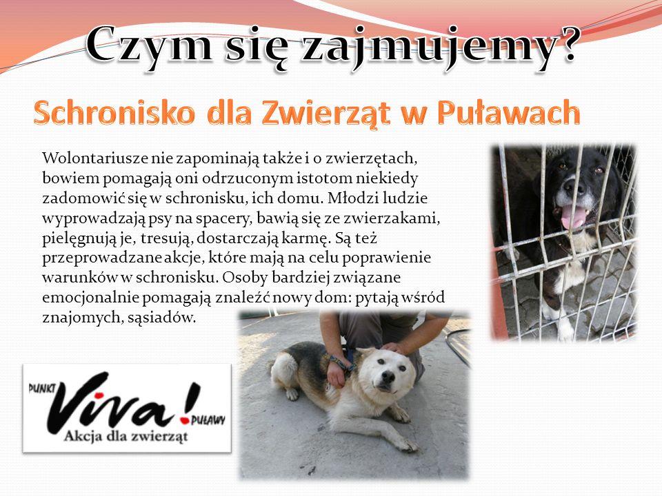 Wolontariusze nie zapominają także i o zwierzętach, bowiem pomagają oni odrzuconym istotom niekiedy zadomowić się w schronisku, ich domu. Młodzi ludzi