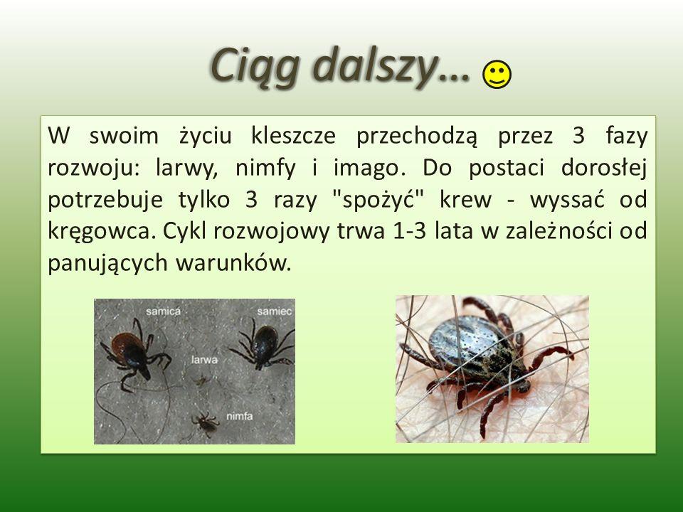Ciąg dalszy… W swoim życiu kleszcze przechodzą przez 3 fazy rozwoju: larwy, nimfy i imago. Do postaci dorosłej potrzebuje tylko 3 razy