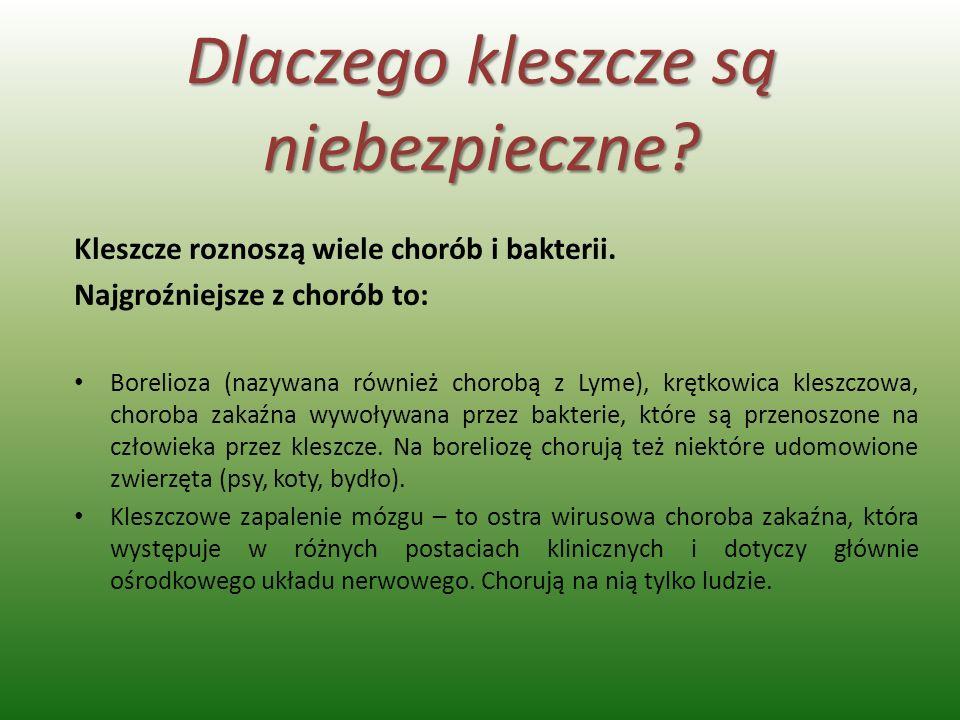 Dlaczego kleszcze są niebezpieczne? Kleszcze roznoszą wiele chorób i bakterii. Najgroźniejsze z chorób to: Borelioza (nazywana również chorobą z Lyme)