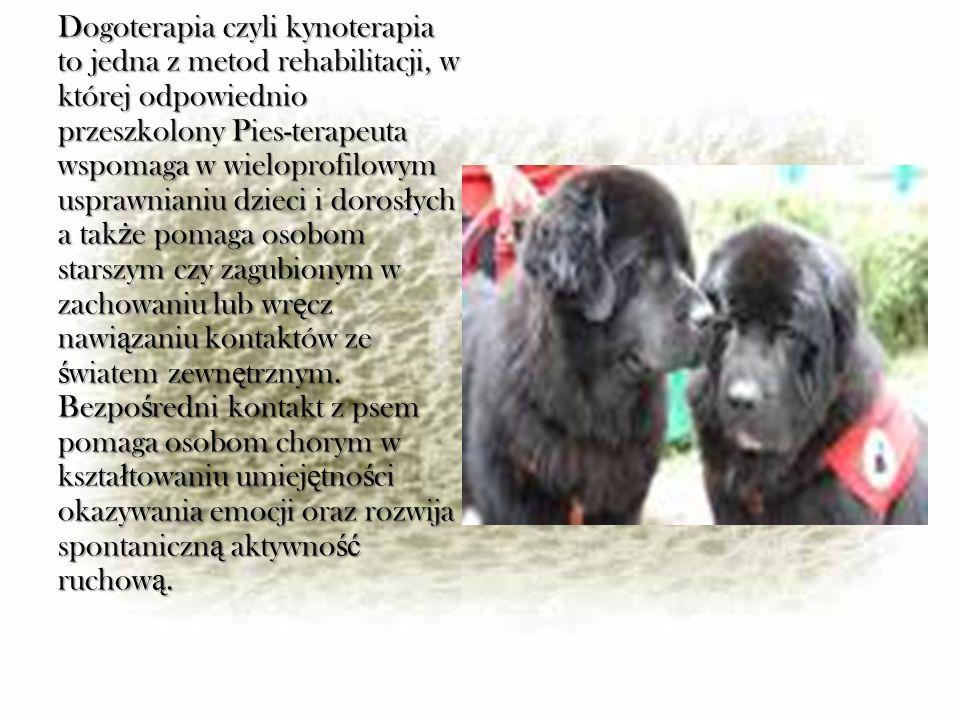 Dogoterapia czyli kynoterapia to jedna z metod rehabilitacji, w której odpowiednio przeszkolony Pies-terapeuta wspomaga w wieloprofilowym usprawnianiu