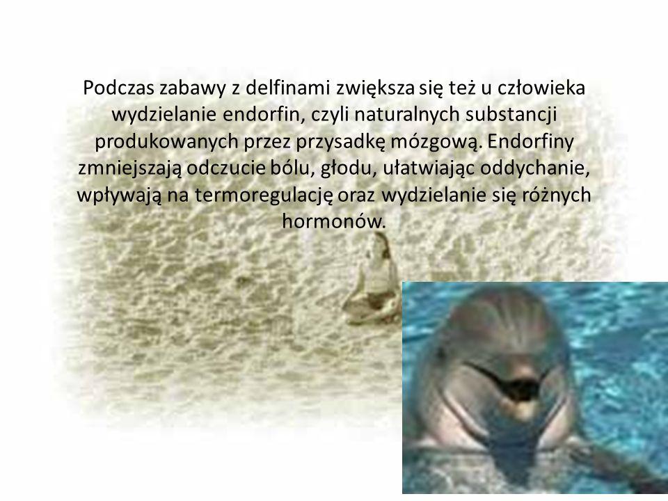 Podczas zabawy z delfinami zwiększa się też u człowieka wydzielanie endorfin, czyli naturalnych substancji produkowanych przez przysadkę mózgową. Endo