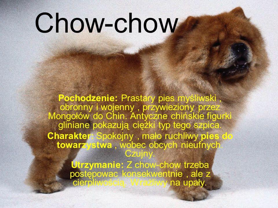 Chow-chow Pochodzenie: Prastary pies myśliwski, obronny i wojenny, przywieziony przez Mongołów do Chin.