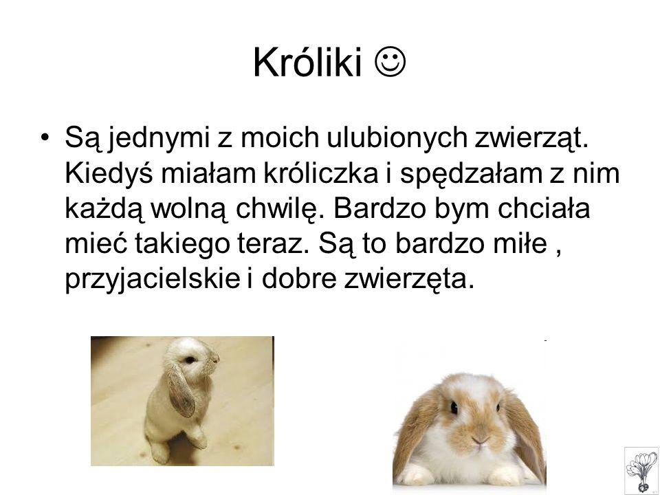 Są jednymi z moich ulubionych zwierząt. Kiedyś miałam króliczka i spędzałam z nim każdą wolną chwilę. Bardzo bym chciała mieć takiego teraz. Są to bar