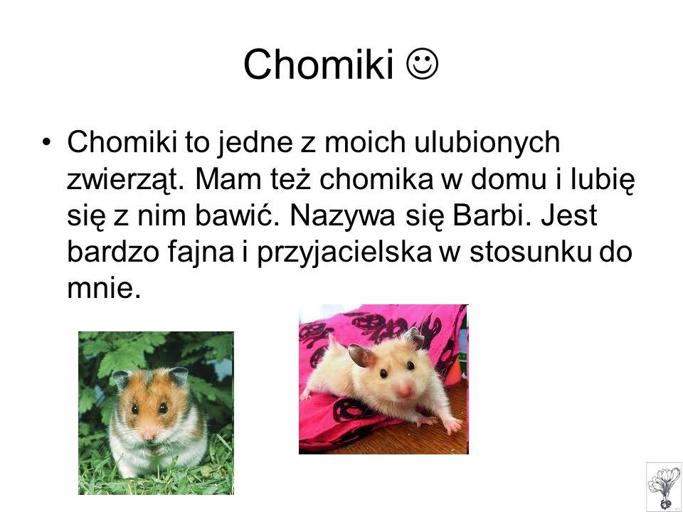 Chomiki to jedne z moich ulubionych zwierząt. Mam też chomika w domu i lubię się z nim bawić. Nazywa się Barbi. Jest bardzo fajna i przyjacielska w st