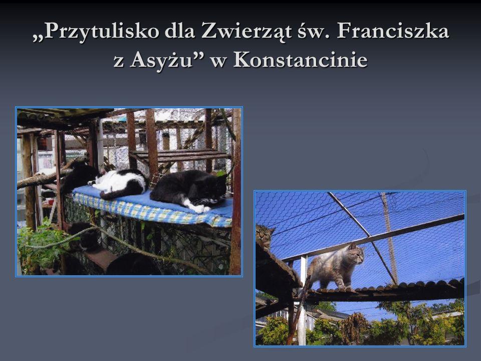 Przytulisko dla Zwierząt św. Franciszka z Asyżu w Konstancinie