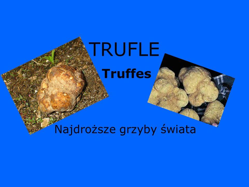 TRUFLE Najdroższe grzyby świata Truffes