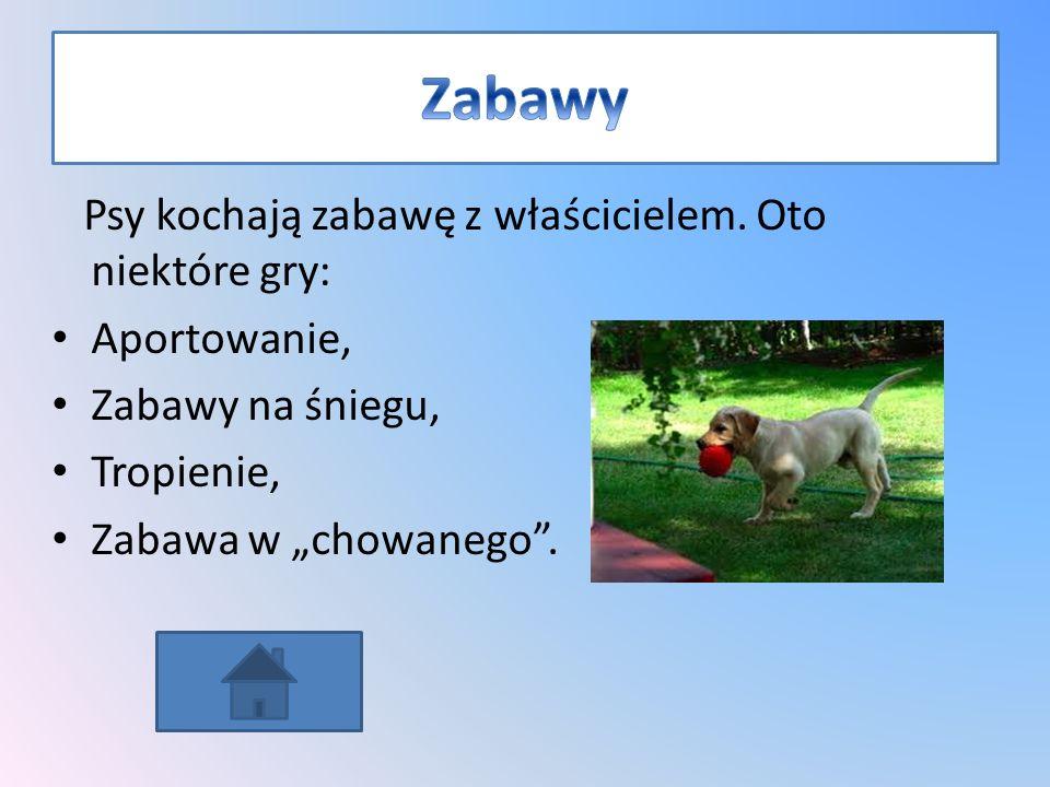 Labradory są wrażliwe na karanie, wystarczy ostrzejsze słowo przy niepożądanym zachowaniu. Głos właściciela wyrażający niezadowolenie poskutkuje jako