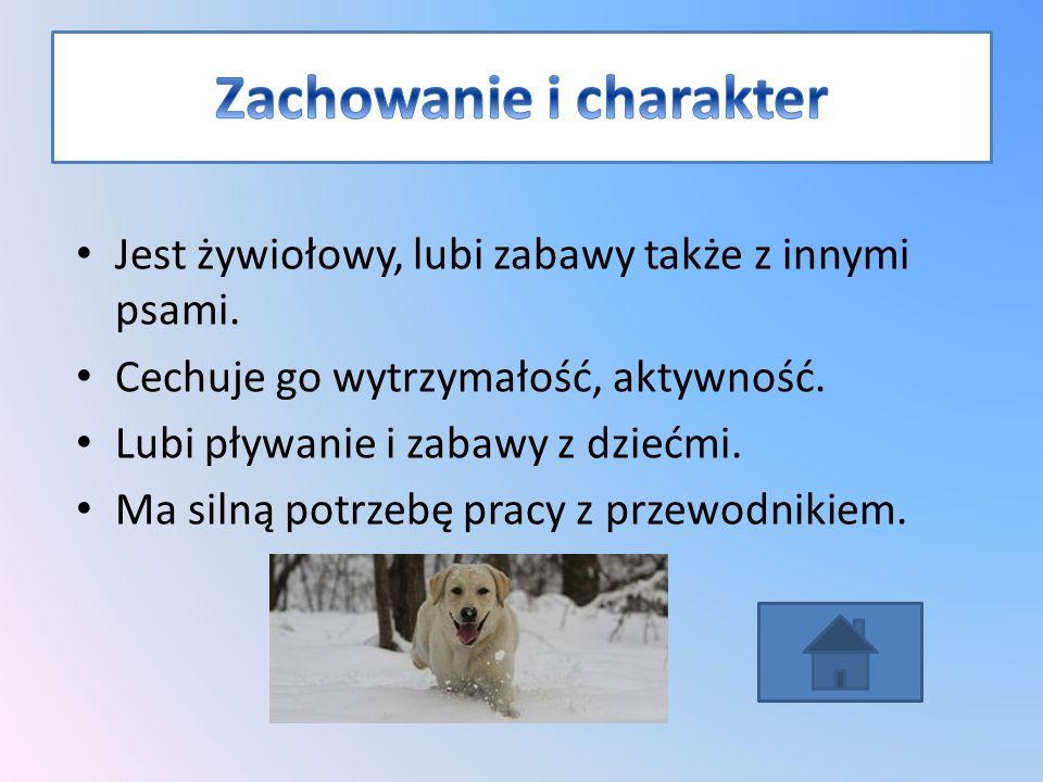 Jest żywiołowy, lubi zabawy także z innymi psami.Cechuje go wytrzymałość, aktywność.