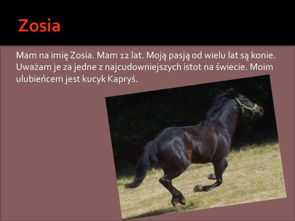 Mam na imię Zosia. Mam 12 lat. Moją pasją od wielu lat są konie. Uważam je za jedne z najcudowniejszych istot na świecie. Moim ulubieńcem jest kucyk K