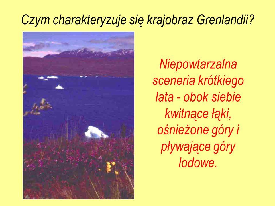 Niepowtarzalna sceneria krótkiego lata - obok siebie kwitnące łąki, ośnieżone góry i pływające góry lodowe. Czym charakteryzuje się krajobraz Grenland