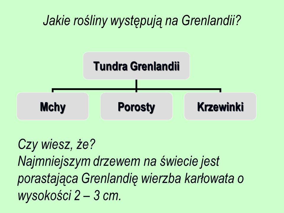 Jakie rośliny występują na Grenlandii? Tundra Grenlandii MchyPorostyKrzewinki Czy wiesz, że? Najmniejszym drzewem na świecie jest porastająca Grenland