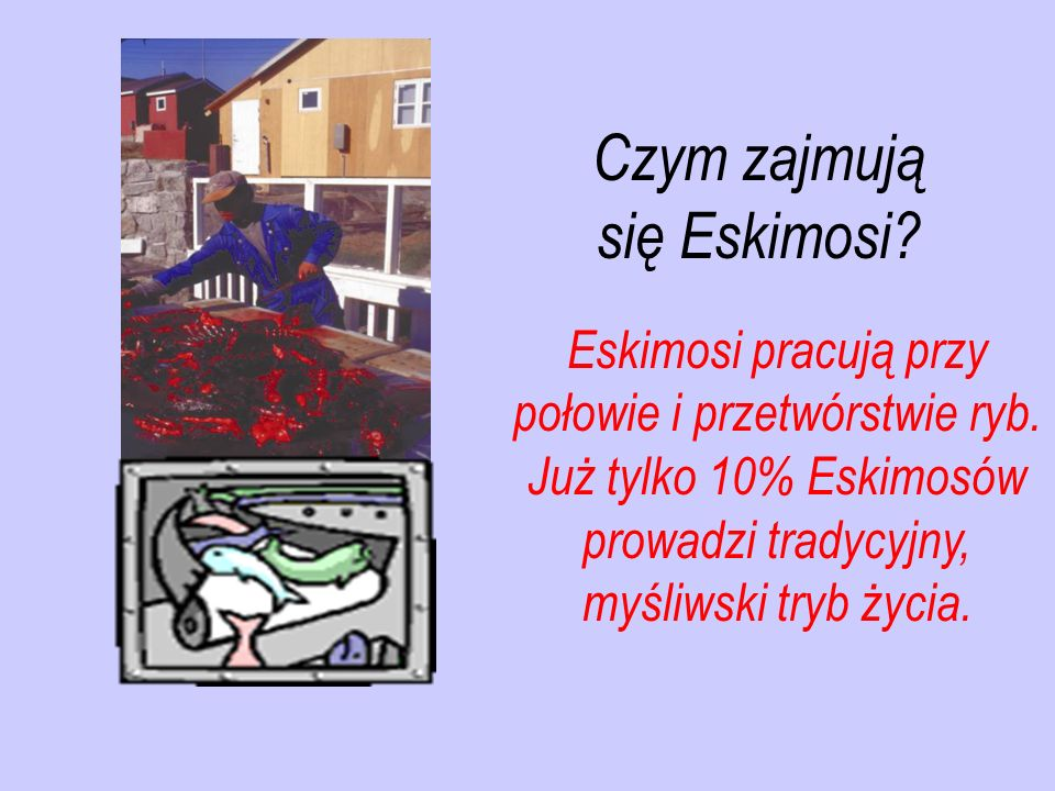 Eskimosi pracują przy połowie i przetwórstwie ryb. Już tylko 10% Eskimosów prowadzi tradycyjny, myśliwski tryb życia. Czym zajmują się Eskimosi?