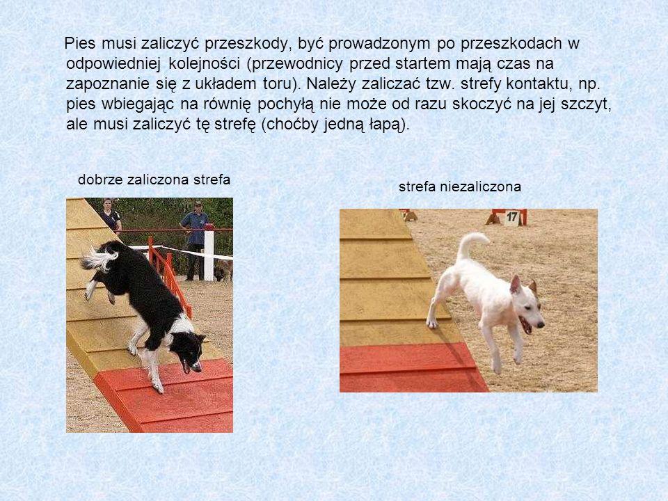 Pies musi zaliczyć przeszkody, być prowadzonym po przeszkodach w odpowiedniej kolejności (przewodnicy przed startem mają czas na zapoznanie się z ukła