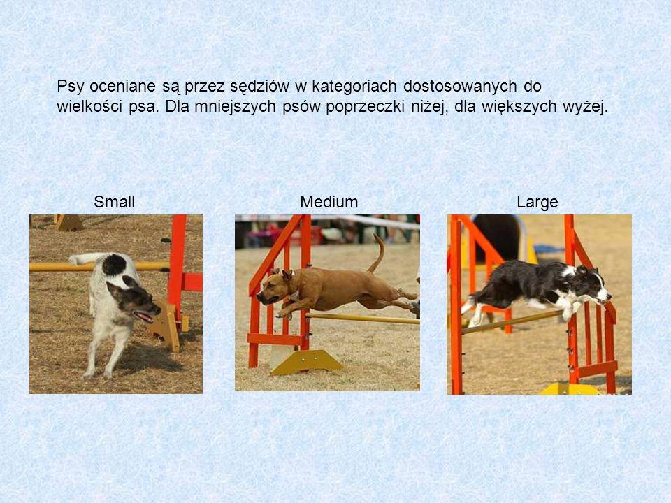 Psy oceniane są przez sędziów w kategoriach dostosowanych do wielkości psa. Dla mniejszych psów poprzeczki niżej, dla większych wyżej. SmallMediumLarg