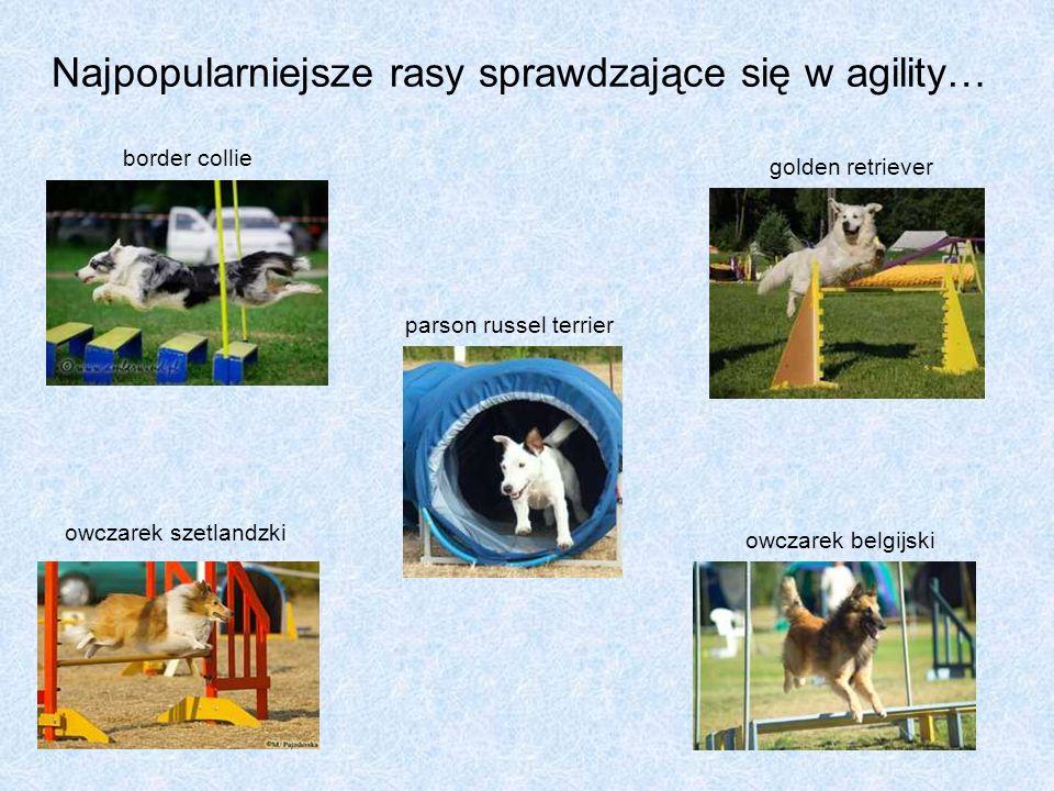 Najpopularniejsze rasy sprawdzające się w agility… golden retriever owczarek belgijski border collie owczarek szetlandzki parson russel terrier