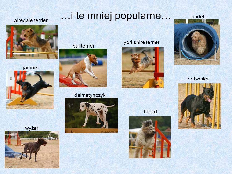 …i te mniej popularne… airedale terrier bullterrier yorkshire terrier jamnik dalmatyńczyk briard pudel wyżeł rottweiler