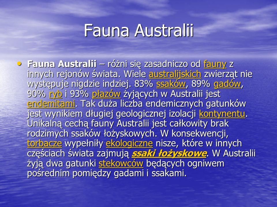 Fauna Australii Fauna Australii – różni się zasadniczo od fauny z innych rejonów świata. Wiele australijskich zwierząt nie występuje nigdzie indziej.