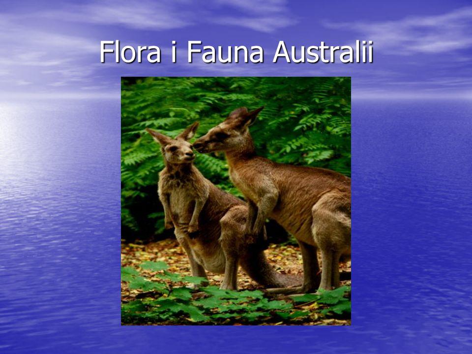 Formacje roślinne Australii Większa część obszaru należy do strefy klimatów zwrotnikowych, jedynie na południowych krańcach występuje klimat umiarkowany.