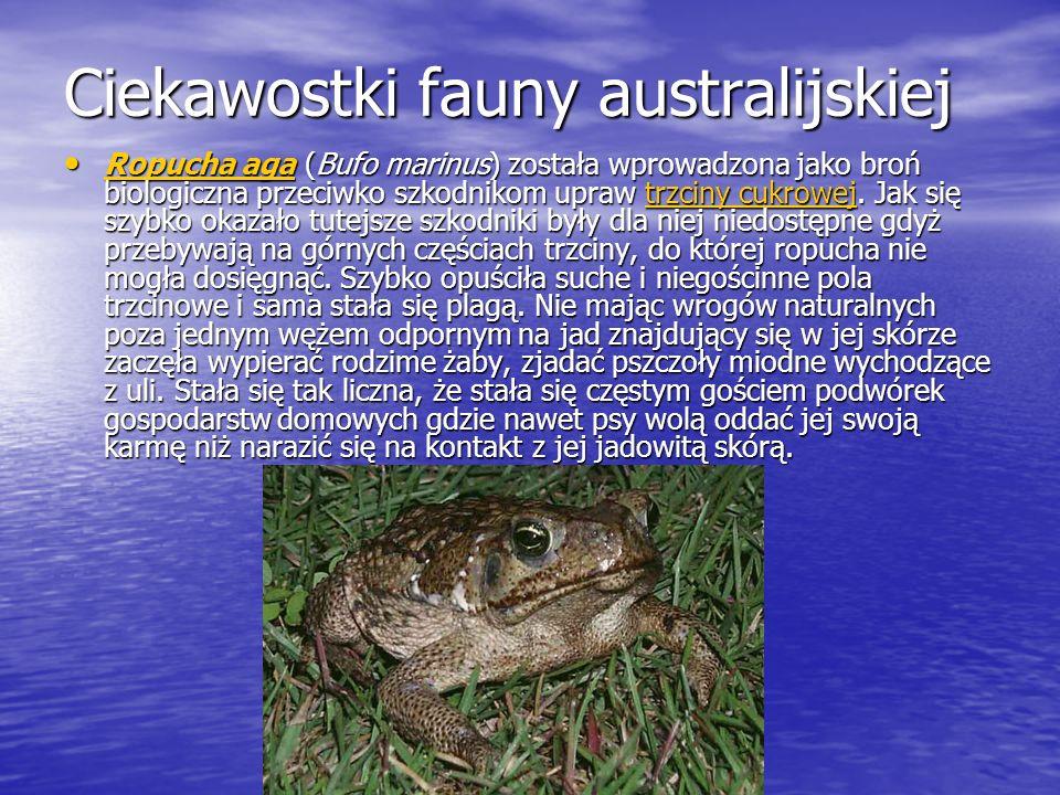 Ciekawostki fauny australijskiej Ropucha aga (Bufo marinus) została wprowadzona jako broń biologiczna przeciwko szkodnikom upraw trzciny cukrowej. Jak
