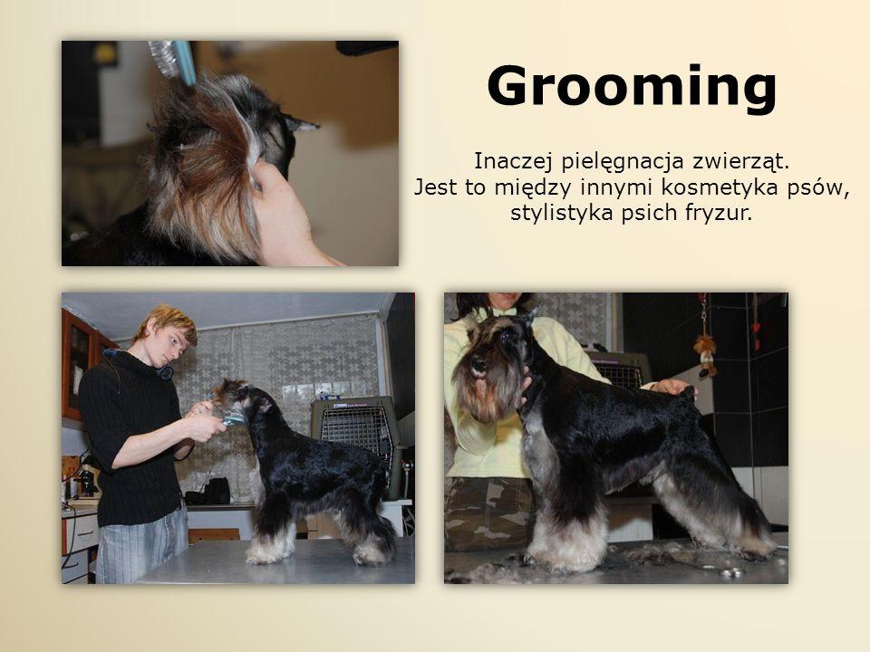 Grooming Inaczej pielęgnacja zwierząt. Jest to między innymi kosmetyka psów, stylistyka psich fryzur.