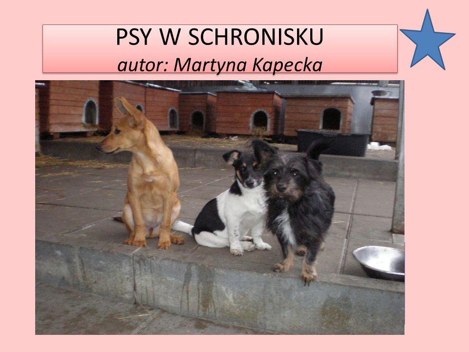 PSY W SCHRONISKU autor: Martyna Kapecka