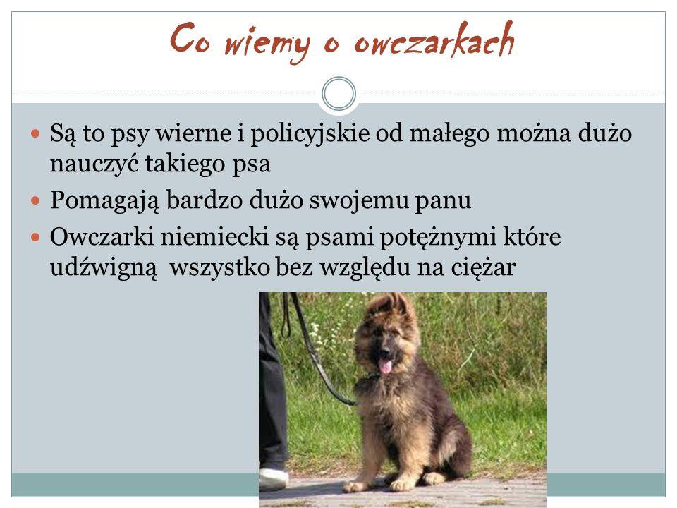 Co wiemy o owczarkach Są to psy wierne i policyjskie od małego można dużo nauczyć takiego psa Pomagają bardzo dużo swojemu panu Owczarki niemiecki są psami potężnymi które udźwigną wszystko bez względu na ciężar