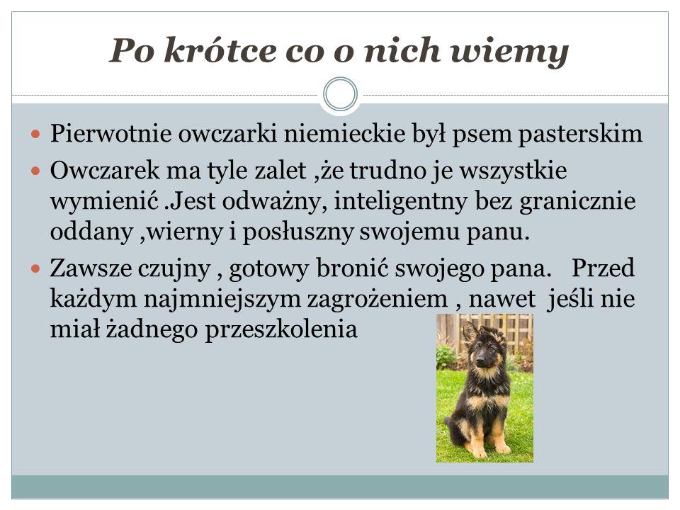 Po krótce co o nich wiemy Pierwotnie owczarki niemieckie był psem pasterskim Owczarek ma tyle zalet,że trudno je wszystkie wymienić.Jest odważny, inteligentny bez granicznie oddany,wierny i posłuszny swojemu panu.